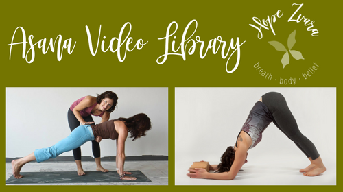 Asana Video Library: Yoga postures, tips and techniques